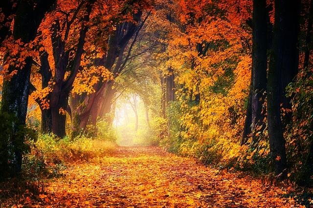 Golden leaves fall autumn