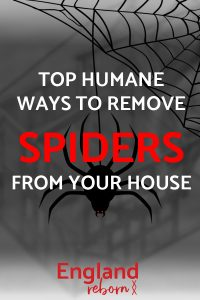 Top humane ways to remove spiders from your house